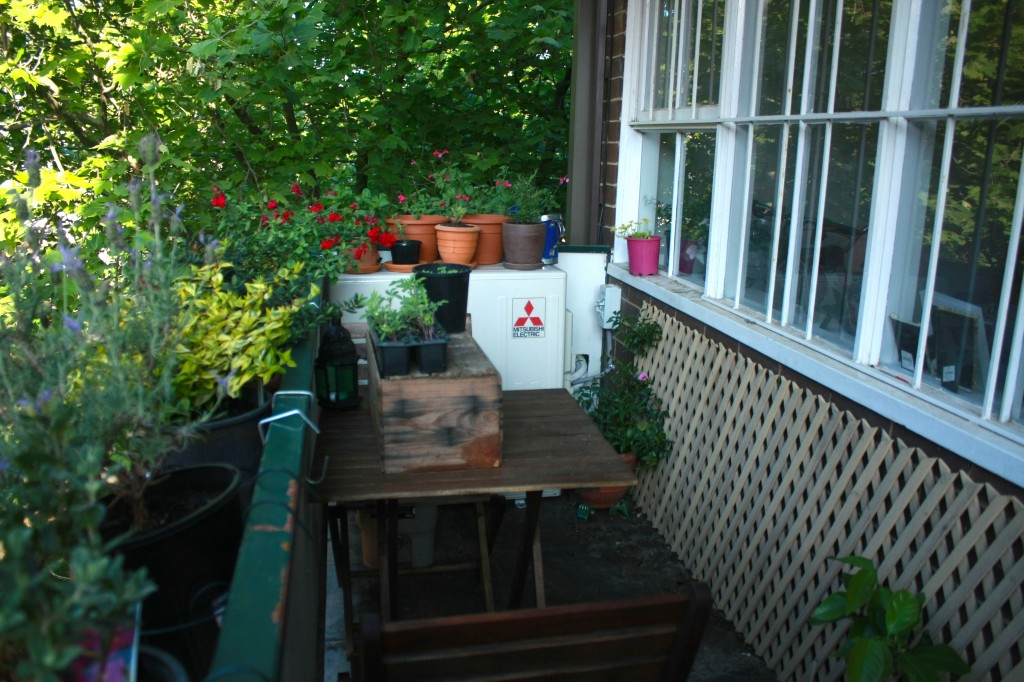 How to grow an edible balcony garden wandering spice for Plants for apartment balcony