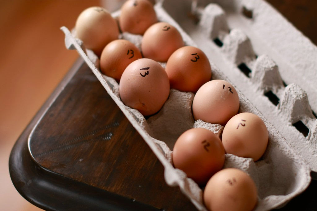 Farm fresh eggs | WanderingSpice.com