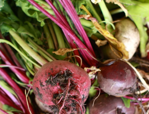 Homegrown Beets | Wandering Spice